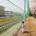 写真: 桜と電車とぼく。