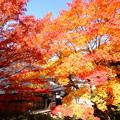 2017年11月6日11時撮影…長野県諏訪市温泉寺にて