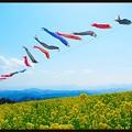写真: 風の丘