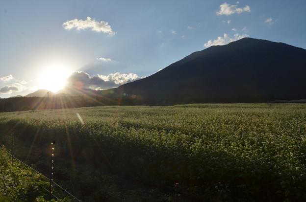 黒姫山のそば畑