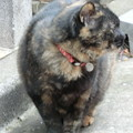 飲屋街の地域猫