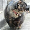 写真: 飲屋街の地域猫