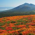 Photos: 三ツ石山頂より岩手山