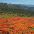 Photos: 紅葉と裏岩手源太ヶ岳