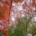 秋のクリスマスカラー