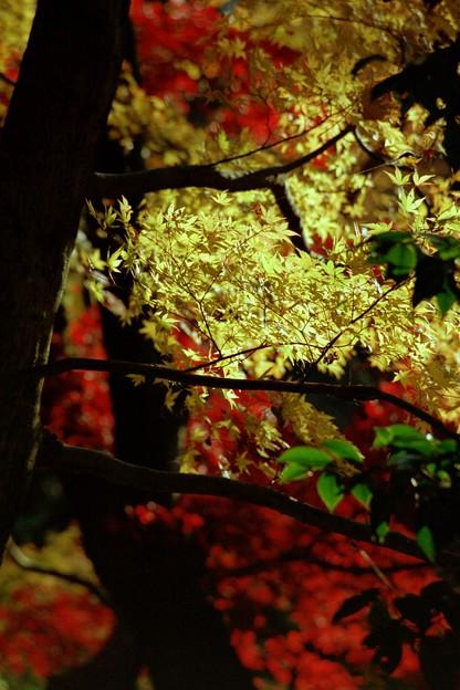 ULTRAな紅葉