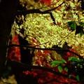写真: ULTRAな紅葉