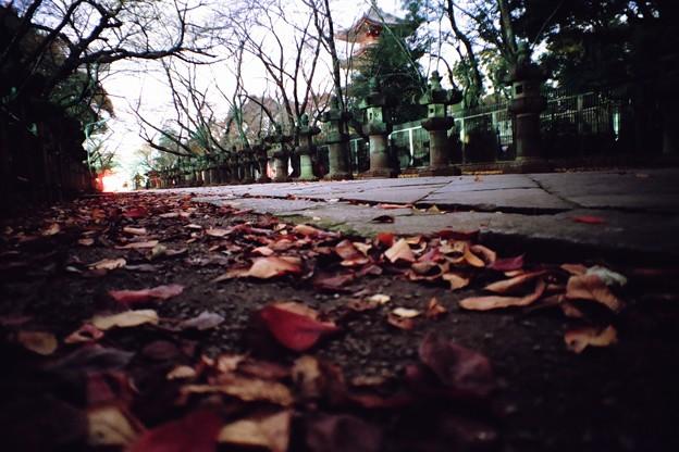 写真: 秋の夜と境内