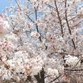 石手川緑地2