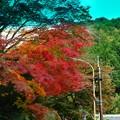 Photos: 写真00367