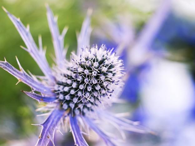 蒼い香り blue-notes 5