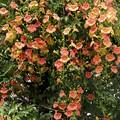 写真: オレンジ色のカーテン