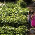 PINK/Urban farm boy & daughter
