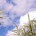 写真: |秋景|少し高い空と穂