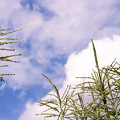 Photos: |秋景|少し高い空と穂