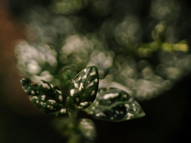 秋の緑を想う・・・e