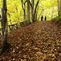 写真: 西岡公園の秋 2