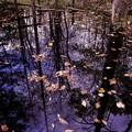 西岡公園の秋 3