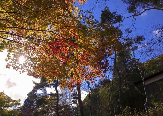 写真: 紅桜公園/錦秋 1/もみじ紅葉黄葉