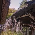 写真: 紅桜公園/錦秋 2/茶室「寿光庵(木乃実茶屋)」