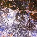 写真: 紅桜公園/錦秋 8/視線の先は庭園の池