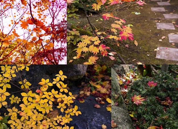 写真: 紅桜公園/錦秋 9/葉あつめて