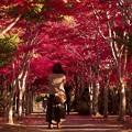秋を撮る a