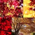 秋を撮る b
