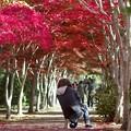 Photos: 秋を撮る c