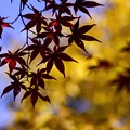 秋を撮る e