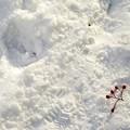 写真: 冬/少しだけ温かい光 3