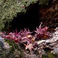 Photos: 秋の旅たち