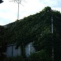 Photos: green wall 2