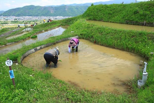 棚田の田植え (2)