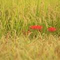 写真: 紅一点に舞う蝶