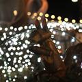 Photos: 灯りのドングリとリス君