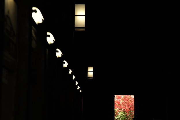 Photos: 光への通路