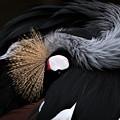 写真: 羽状