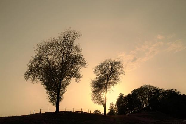 写真: 夕暮れの丘