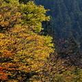 写真: 秋景2