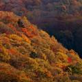 写真: 秋景5