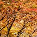 写真: 秋景8
