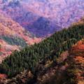 写真: 秋景12
