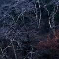 写真: 晩秋