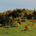 野反湖の秋1