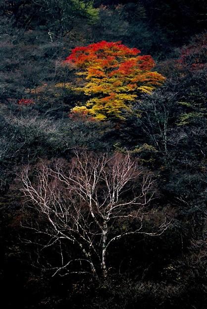 晩秋の榛名山