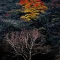 写真: 晩秋の榛名山