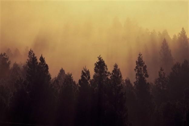 Photos: 森林の朝