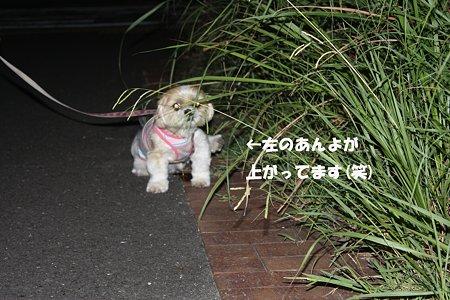 夜のお散歩4