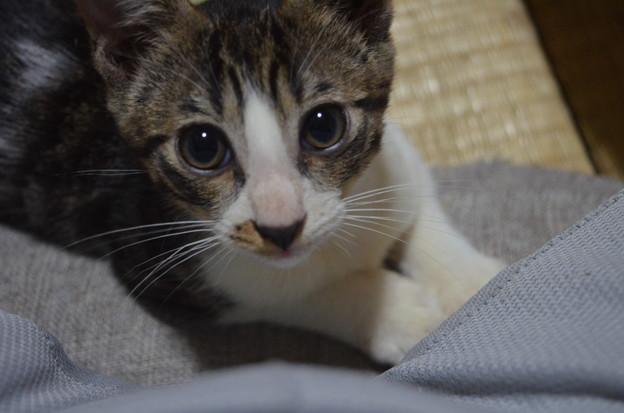 写真: 子猫ちゃんです。